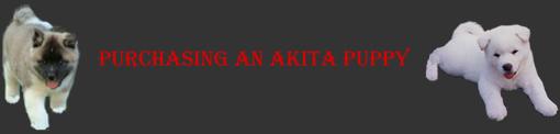 Akita puppies - Information on Purchasing an Akita Puppy