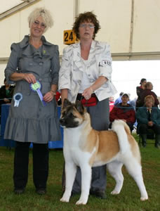 Maddison Best Puppy in Breed at Paignton