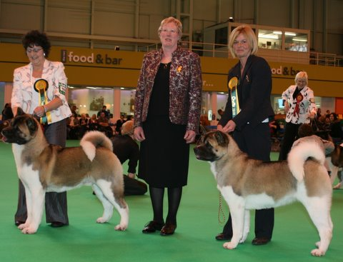 Nosferatu Akitas wining dog and bitch RCCs at Crufts 2009